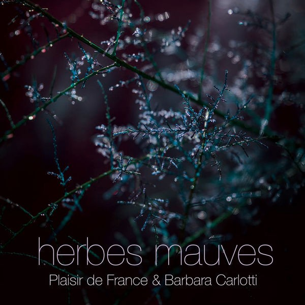 Herbes Mauves